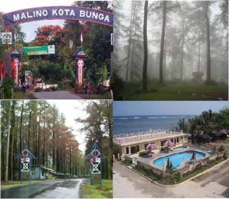 Malino Hutan Wisata Wisata Sulawesi