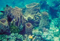 Keindahan Bawah laut Taka Bonerate
