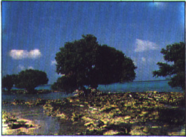 Pulau Karang Taka Bonerate