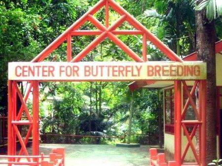 Pusat Pelestarian Kupu-kupu Bantimurung