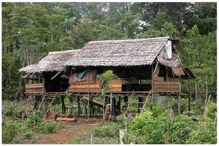 Rumah Suku Wana Pinggiran Hutan lindung Marowali