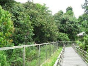 Hutan Lindung Sungai Wain eharmayakublogspotcom