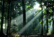 hutan