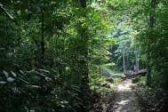 Merjalan Kaki menuju Air Terjun Moramo
