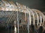 Museum siwalima2 tutinonkawp